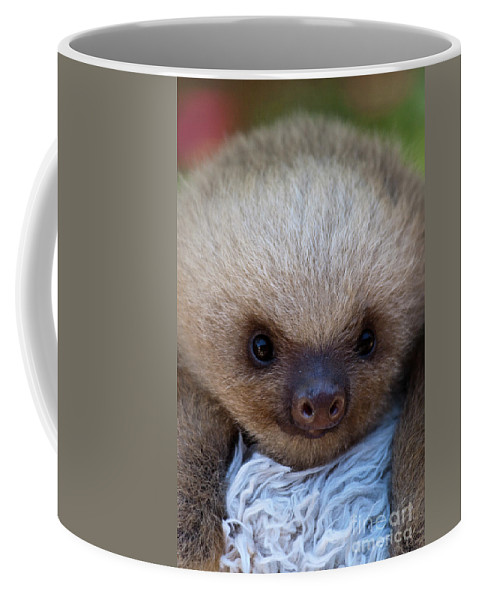 Sloth Coffee Mug featuring the photograph Baby Sloth by Heiko Koehrer-Wagner