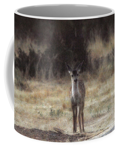 Fawn Coffee Mug featuring the photograph Baby Soft by Donna Blackhall