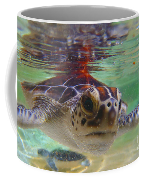 Turtle Coffee Mug featuring the photograph Baby Turtle by Carey Chen