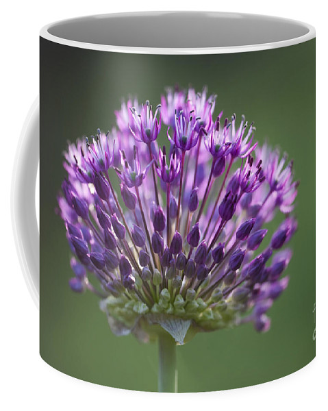 Garden Coffee Mug featuring the photograph Backlit Sensation by Anne Gilbert