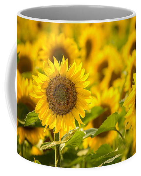 Sunflower Coffee Mug featuring the photograph Backlit Sunflower by Mark Robert Rogers