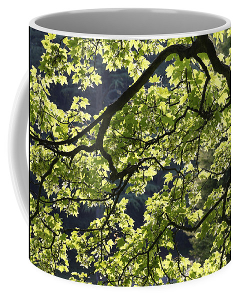 Background Coffee Mug featuring the photograph Backlit Tree by Steve Ball