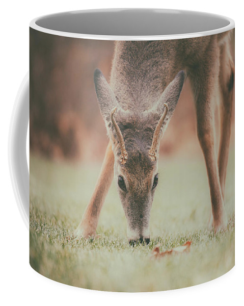 Natures Winter Visit Coffee Mug featuring the photograph Backyard Beauty by Karol Livote