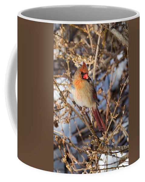 Cardinal Coffee Mug featuring the photograph Backyard Birds Female Nothern Cardinal by Bill Wakeley