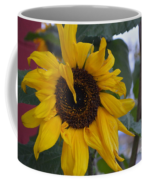 Bad Coffee Mug featuring the photograph Bad Petal Day by Brian Boyle