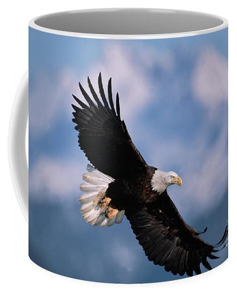00343849 Coffee Mug featuring the photograph Bald Eagle Flying, Kachemak Bay by Yva Momatiuk John Eastcott