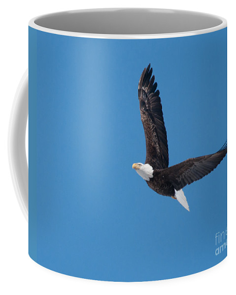 Bald Eagle Coffee Mug featuring the photograph Bald Eagle In Flight 2 by Ronald Grogan