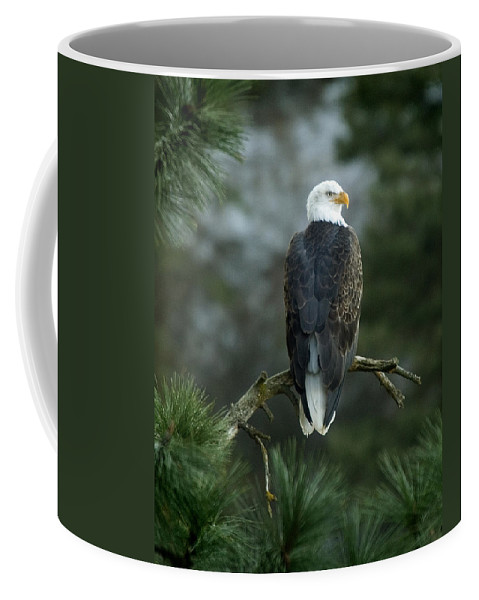 Bald Eagle Coffee Mug featuring the photograph Bald Eagle in Tree by Paul DeRocker