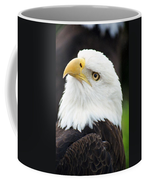Bald Eagle Coffee Mug featuring the photograph Bald Eagle - Power And Poise 01 by Pamela Critchlow