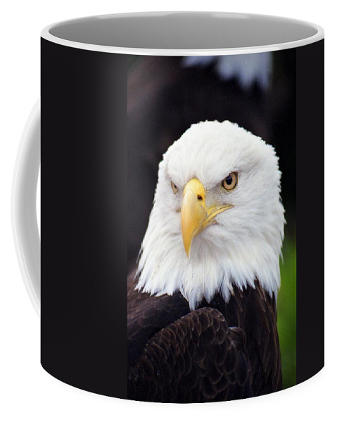 Bald Eagle Coffee Mug featuring the photograph Bald Eagle - Power And Poise 02 by Pamela Critchlow