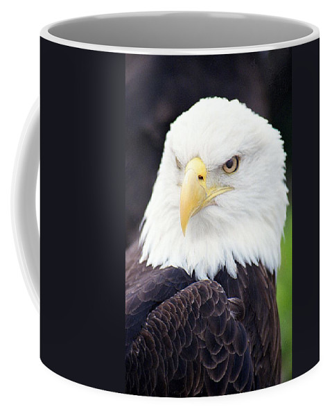 Bald Eagle Coffee Mug featuring the photograph Bald Eagle - Power And Poise 04 by Pamela Critchlow