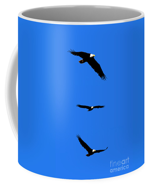 Eagle Coffee Mug featuring the photograph Bald Eagle Triptych by Thomas Marchessault