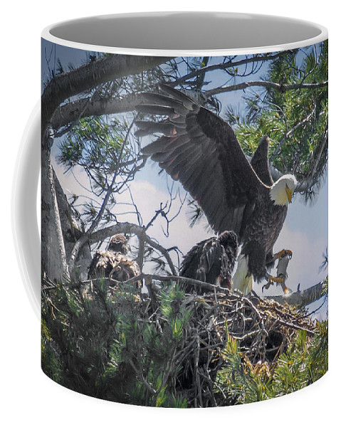 Bald Eagle Coffee Mug featuring the photograph Bald Eagle With Eaglets And Fish by Everet Regal