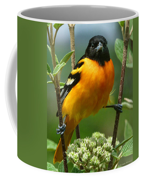 Oriole Coffee Mug featuring the photograph Baltimore Oriole by Bruce Morrison