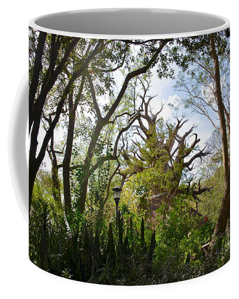 Tree Coffee Mug featuring the photograph Baobab Tree by Carol Bradley