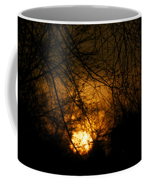 Sun Coffee Mug featuring the photograph Bare Tree Branches With Winter Sunrise by Thomas Woolworth