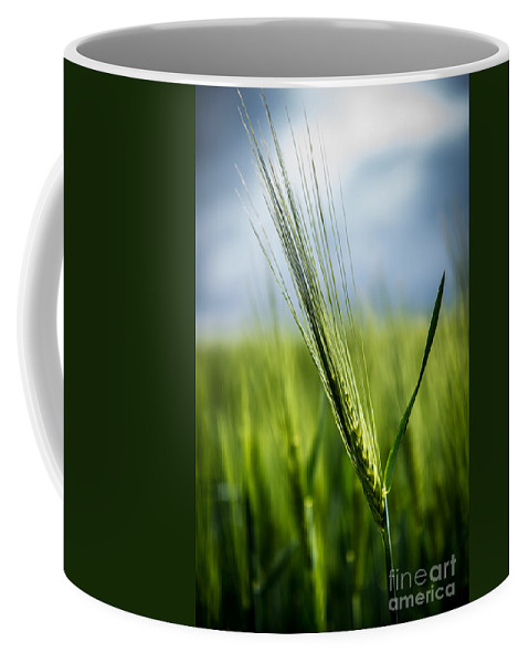 Agriculture Coffee Mug featuring the photograph Barley by Hannes Cmarits
