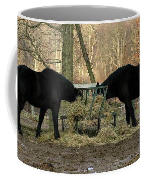 Horse Coffee Mug featuring the photograph Barnyard Beauties by Ann Horn