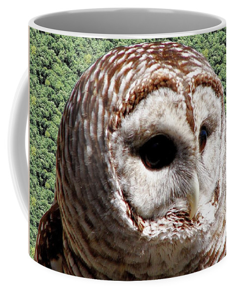 Barred Owl Coffee Mug featuring the photograph Barred Owl 2 by Rose Santuci-Sofranko