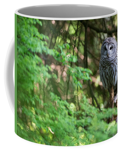 Barred Owl Coffee Mug featuring the photograph Barred Owl In Forest by Max Waugh