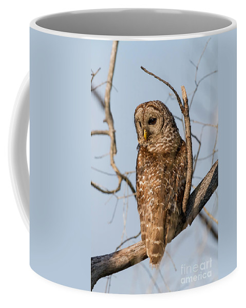 Owl Coffee Mug featuring the photograph Barred Owl Okefenokee Swamp Georgia by Dawna Moore Photography
