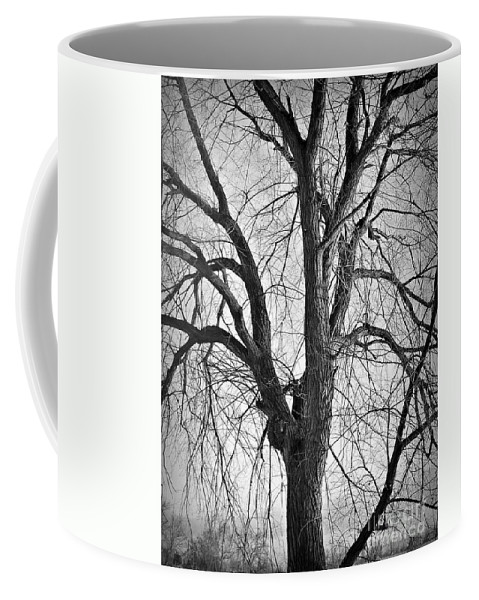 Barren Coffee Mug featuring the photograph Barren by Chalet Roome-Rigdon