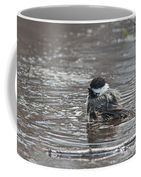 Chickadee Coffee Mug featuring the photograph Bath Time by Jim Zablotny