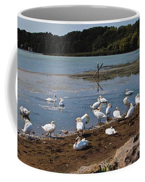 Sea Gulls Coffee Mug featuring the photograph Bath Time by William Norton