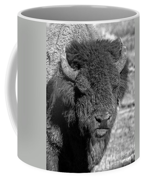 Hayden Valley Coffee Mug featuring the photograph Battle Worn Bull by James Anderson