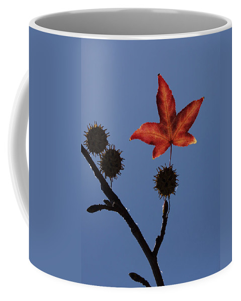 Western Sycamore Coffee Mug featuring the photograph Be Happy by Ernie Echols