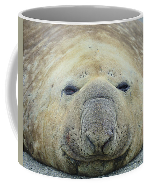 Southern Elephant Seal Coffee Mug featuring the photograph Beach Bum by Tony Beck