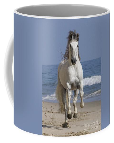 Andalusian Stallion Coffee Mug featuring the photograph Beach Run by Carol Walker