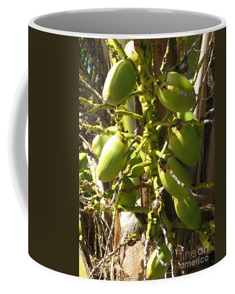 Palmtree Coffee Mug featuring the photograph Bear Fruit by Christiane Schulze Art And Photography