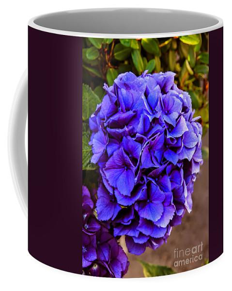 Flowering Coffee Mug featuring the photograph Beautiful Blue Hydrangea by Robert Bales