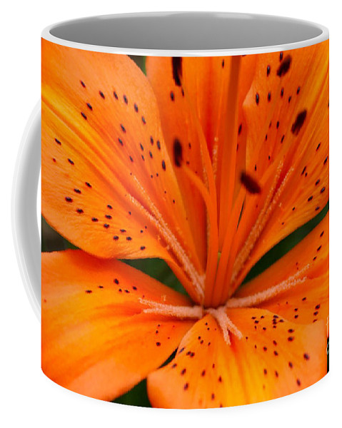 Flower Coffee Mug featuring the photograph Beautiful Lily by Carol Lynch