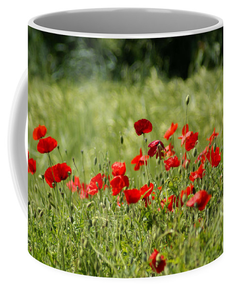 Poppies Coffee Mug featuring the photograph Beautiful Poppies 1 by Carol Lynch