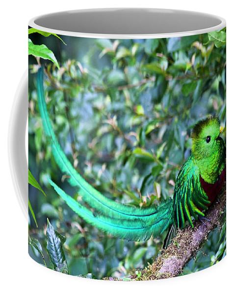 Bird Coffee Mug featuring the photograph Beautiful Quetzal 3 by Heiko Koehrer-Wagner