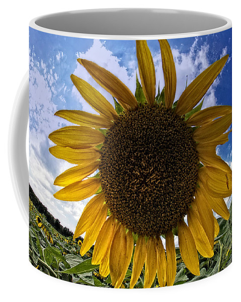 Sunflower Coffee Mug featuring the photograph Beautiful Sunflower by Alice Gipson