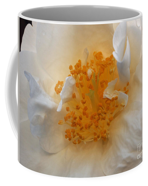 Rose Coffee Mug featuring the photograph Beautiful White Rose by Jacklyn Duryea Fraizer