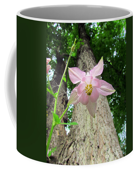 Star Flower Coffee Mug featuring the photograph Beauty From Below by Elizabeth Dow