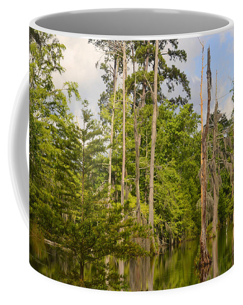 Trees Coffee Mug featuring the photograph Beauty In A Swamp by Leticia Latocki