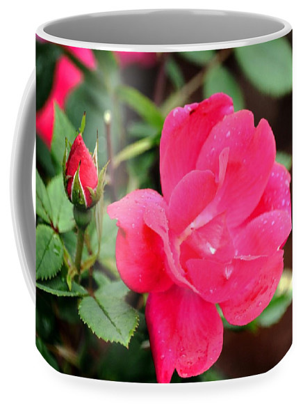 Rose Coffee Mug featuring the photograph Beauty In The Garden by Karen Majkrzak