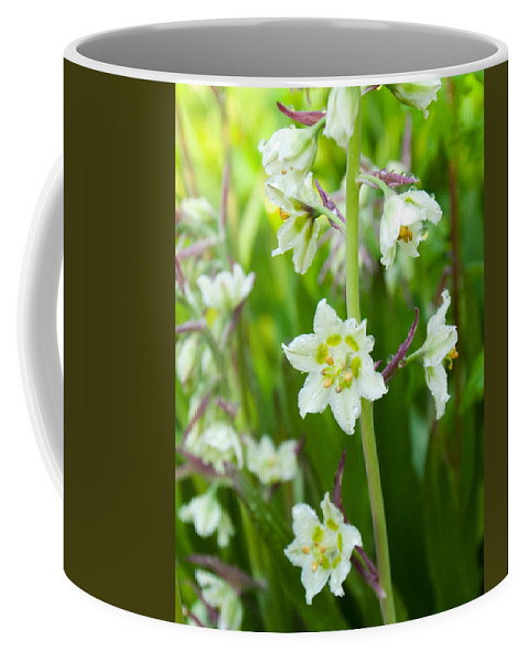 Death Camas Coffee Mug featuring the photograph Beauty Of The Death Camas Flower by Cascade Colors