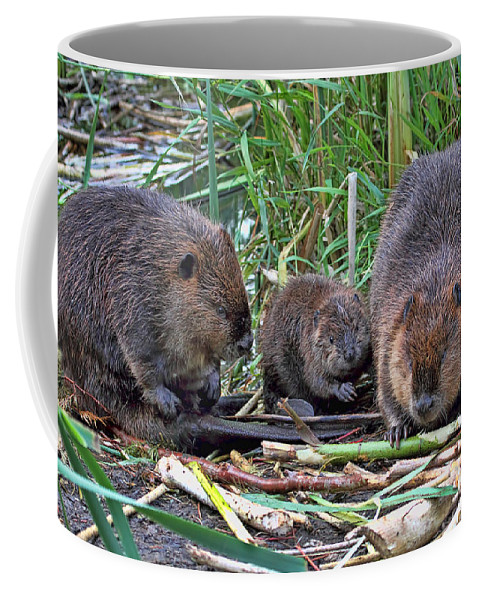 Beavers Coffee Mug featuring the photograph Beaver Family by Peggy Collins