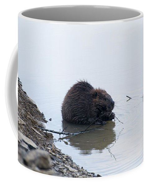 Beaver Coffee Mug featuring the photograph Beaver In The Shallows by Chris Flees