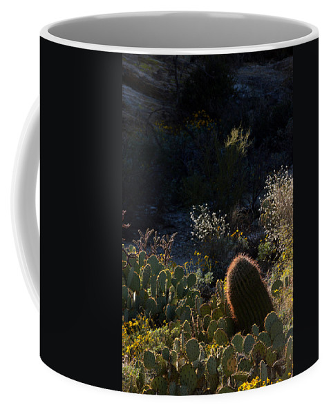 Cactus Coffee Mug featuring the photograph Bed Of Cactus by Michael McGowan