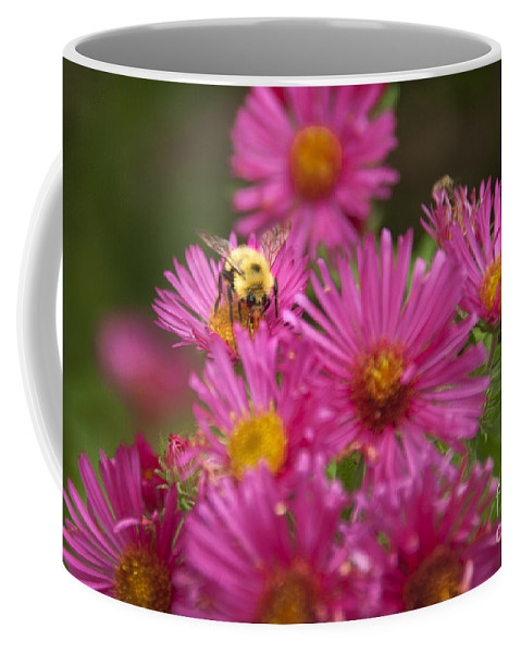 Bee Coffee Mug featuring the photograph Bee by Alana Ranney