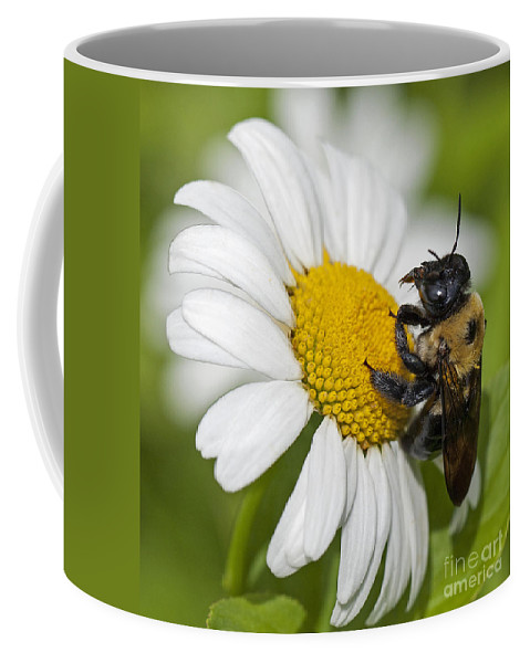 Bee Coffee Mug featuring the photograph Bee And Daisy by Emma England