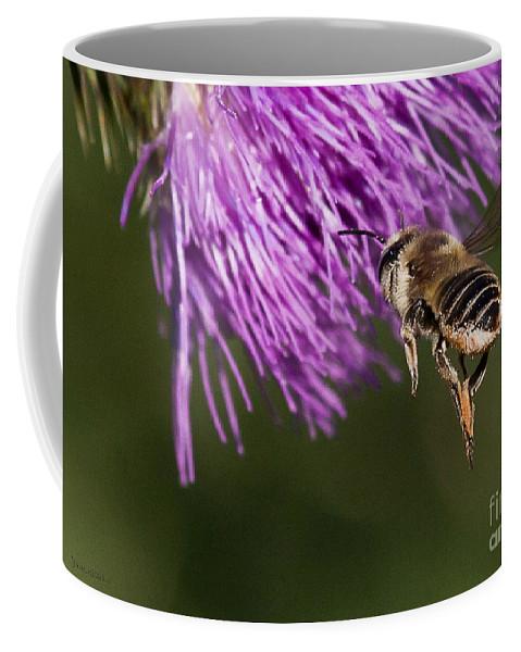 Honey Bee Coffee Mug featuring the photograph Bee Butt by Jan Killian