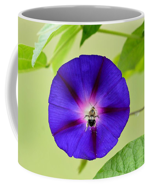 Morning Glory Coffee Mug featuring the photograph Bee Nirvana by Thomas Phillips